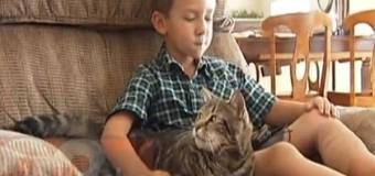 Смелый поступок кошки: она спасла малыша от разъяренного пса. Видео