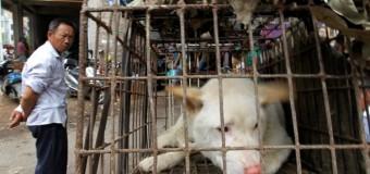 В Китае пройдет жестокий и опасный фестиваль собачьего мяса. Видео