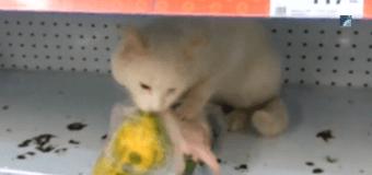 В российском супермаркете поймали необычного вора на месте преступления. Видео