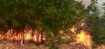 Под Николаевом горит степь. Видео
