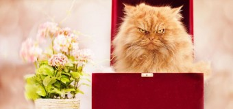 Самый сердитый кот покоряет интернет. Фото