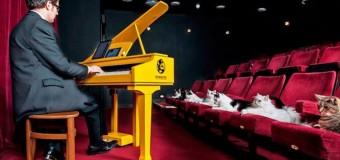 Кошачий рояль. Фото