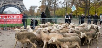 К подножию Эйфелевой башни привели около 200 овец. Фото