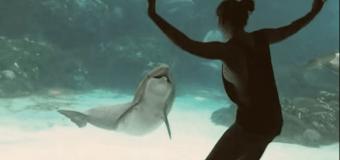 Девочка развеселила дельфина. Видео