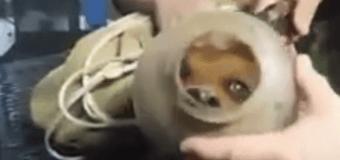 В США спасли собаку из «кувшинного» плена. Видео