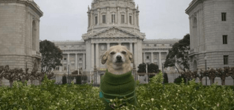 Собака стала мэром Сан-Франциско на один день. Фото