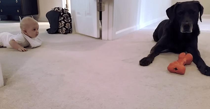 Гифка малыш и собака