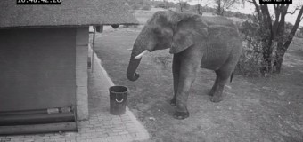 Слон-чистюля убрал за людьми мусор. Видео