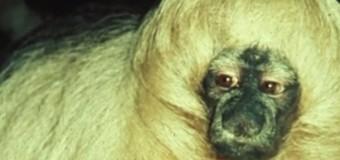 The Verge опубликовал Топ-10 самых милых животных. Видео