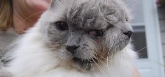 Умер знаменитый кот долгожитель с двумя мордами. Фото