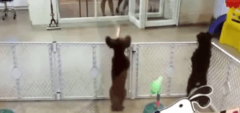 Новый хит YouTube: Как умеют танцевать собаки. Видео
