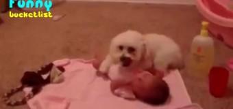 Защищающий младенца песик стал звездой Youtube. Видео