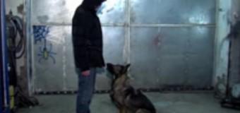 Собака-бандеровка отвечает на лозунг «Слава Украине». Видео