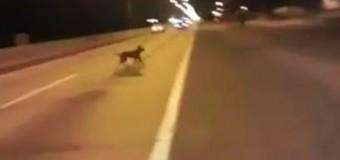 Видео с «телепортирующейся» собакой «взорвало» интернет