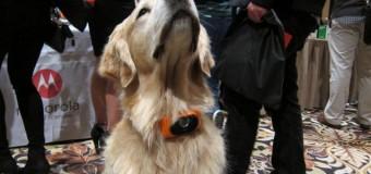 В Америке создали смартфон-ошейник для собак. Видео