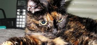 В Калифорнии живет самая старая кошка в мире. Фото