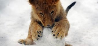 Как животные радуются снегу. Фото