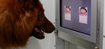 Ученые доказали, что собаки умеют различать злые и веселые лица. Видео