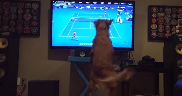 фото перед телевизором