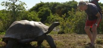 Огромный разгневанный самец черепахи «отомстил» исследователям за прерванный интим. Видео