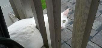 Глупые коты, которые попали в нелепые ситуации. Фото
