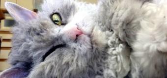 Кот, который похож на Эйнштейна, взорвал сеть. Фото