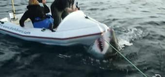 Огромная белая акула напала на съемочную группу канала Discovery. Видео