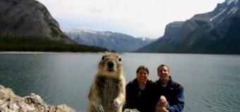 Снимки смешных животных «порвали» сеть. Фото