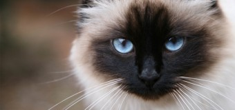 В Египте спасли кота, 5 лет просидевшего в стене. Видео
