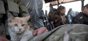 Как волонтеры спасают животных из-под обстрелов на Донбассе. Видео