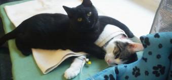Кот помогает другим животным после операции. Фото