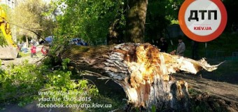 В Киеве дерево рухнуло на авто: погиб ребенок. Фото