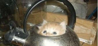 Подборка смешных фото котов, которые залезли в самые неожиданные места