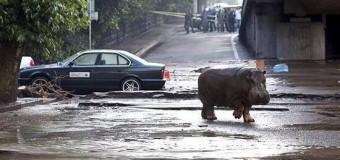 Сбежавшие животные в Грузии «будоражат» соцсети. Видео