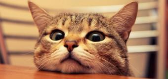 Кот, ворующий тапки, покоряет пользователей сети. Видео