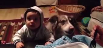 Собака научилась говорить «Мама» быстрее, чем ребенок. Видео