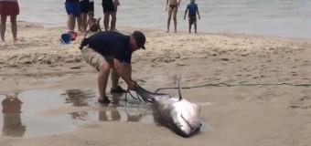 Видеохит: Отдыхающие сами убрали акулу с берега в воду