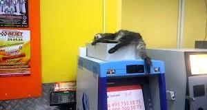 Сеть «взорвал» ленивый кот, парализовавший работу банкомата. Видео