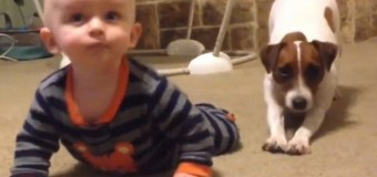 Четвероногий друг учит малыша ползать. Видео