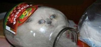 Застрявшие коты или наказание за любопытство. Фото