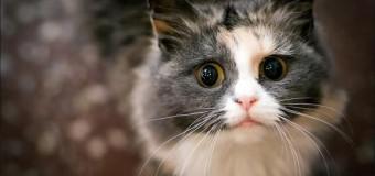 Британец обратился в полицию из-за кошки, которая съела его бекон. Видео