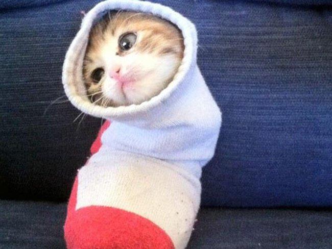 Смешные фото: коты спрятались в носках