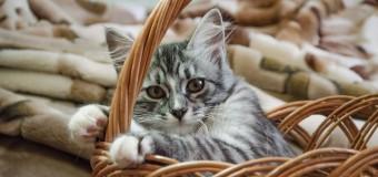 Летающий в корзине кот стал звездой сети. Видео