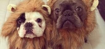Хит сети: собаки собираются на Хэллоуин. Фото