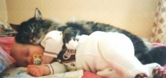 Хит сети: кот делает массаж малышу. Видео