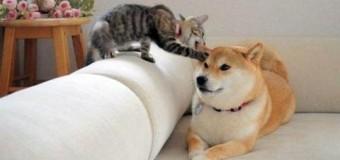 Кот и щенок сразились за кусок еды. Видео
