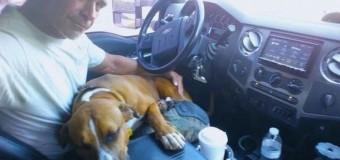 Пса воспитывали как убийцу, а он стал милым другом. Фото