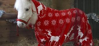 Забавный пони в смешной пижаме стал звездой сети. Фото