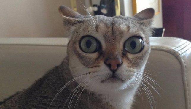 весёлые коты картинки