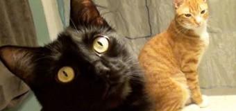 Хит сети: хозяин преподнес коту на день рождения небычный подарок. Видео